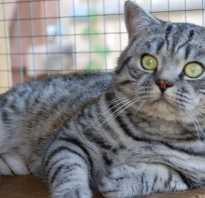 Котята окраса табби