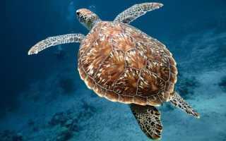 Факты про черепах