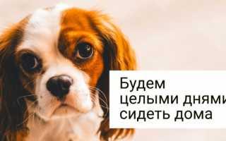 Неприхотливые породы маленьких собак