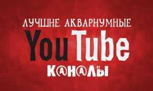 Аквариумные YouTube-каналы: лучшие из лучших!
