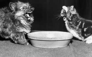 Котенок заболел ничего не ест