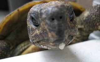 Как вылечить черепаху в домашних условиях