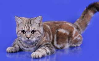 Котенок черепахового окраса фото