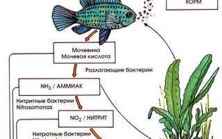 Нитриты в аквариуме: как понизить, проверить, бороться и удерживать?