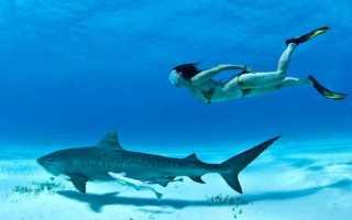 С какой скоростью плавают акулы