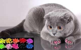 Как клеить колпачки на когти кошке