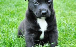 Как отличить дворняжку от породистой собаки