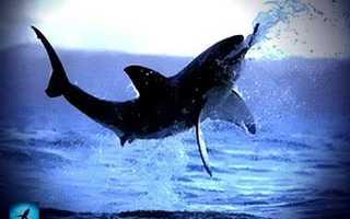 Скелет акулы картинки