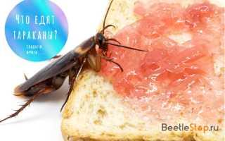 Что любят есть тараканы