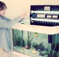 Как правильно обустроить аквариум для рыбок