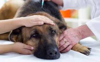 Как вылечить энтерит у щенка