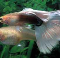 Как получается икра у рыб