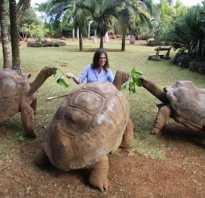 Самая большая черепаха на планете