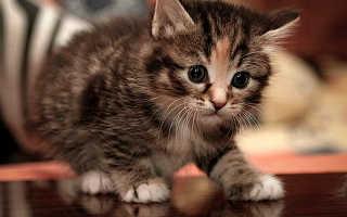 В каком возрасте кастрируют котов: в каком возрасте это лучше делать