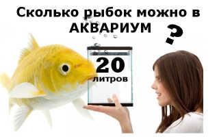 Сколько рыбок в 20 литровом аквариуме