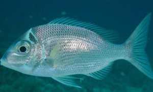 Строение рыб: внешнее и внутреннее, особенности, фото-видео обзор