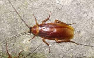 Укусы тараканов на человеке фото
