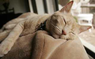 Как самому усыпить кота