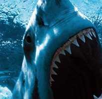 Акула из воды