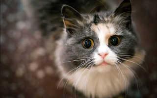 Почему у кота слезы из глаз