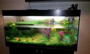 Мой первый акватеррариум с черепахами