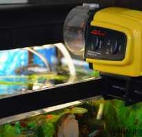 Автокормушки для рыб: какую выбрать?