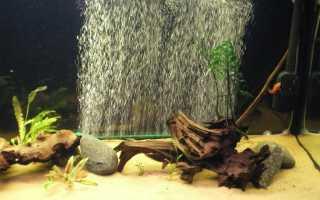 Самый бесшумный аэратор для аквариума — BubbleMaker видео-обзор