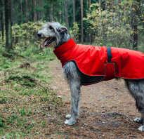 Попона для собаки своими руками: выкройки и как сшить