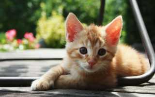 Домашнего котика выбросили на улицу вместе с его вещами