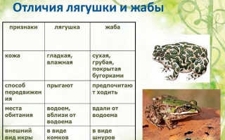 Найти сравнение лягушки и жабы