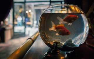 Рыбки не требующие ухода