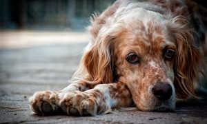 Можно ли выдрессировать взрослую собаку