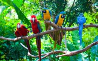 Что едят попугаи в дикой природе