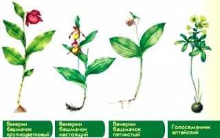Проект растения красной книги 3 класс