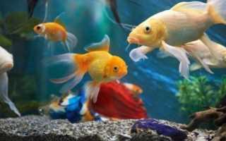 Как назвать девочку рыбу