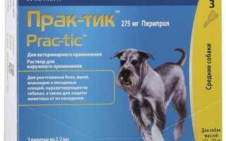 Прививки и глистование щенков