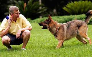 Самостоятельная дрессировка щенка
