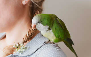Какое имя дать попугаю девочке