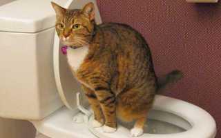 Биохимический анализ мочи кота: расшифровка показателей, нормы