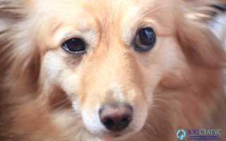 Упражнения для собаки: для чего они нужны, занятия укрепления для спины и задних лап