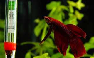 Аквариумные рыбки температура в аквариуме
