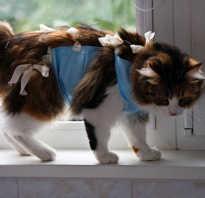 Попона, воротник и бандаж для кошки: как сделать своими руками и правильно завязать