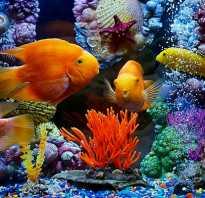 Мирные аквариумные рыбки фото с названиями