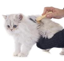 Колтуны у котов и кошек: как избавиться и убрать в домашних условиях, почему появляются