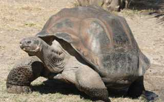 Строение тела черепахи