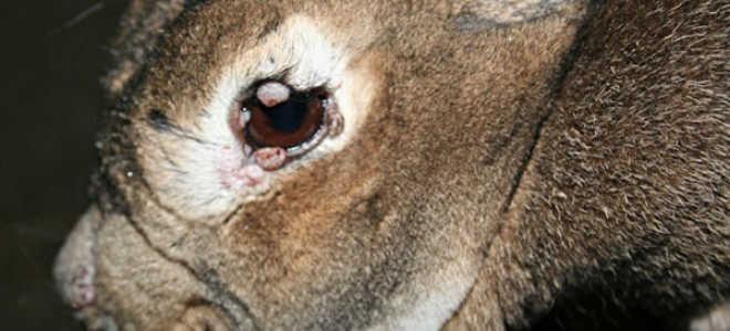 Можно ли есть больного кролика