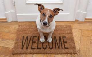 Маленькая собака для дома неприхотливая порода
