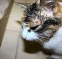 Симптомы болезни кота