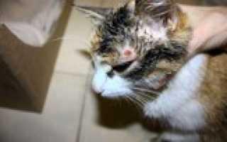 Заболевания кошек и их лечение