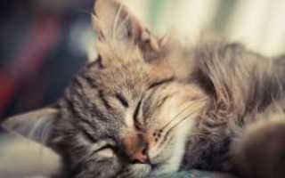 Чем можно усыпить кота